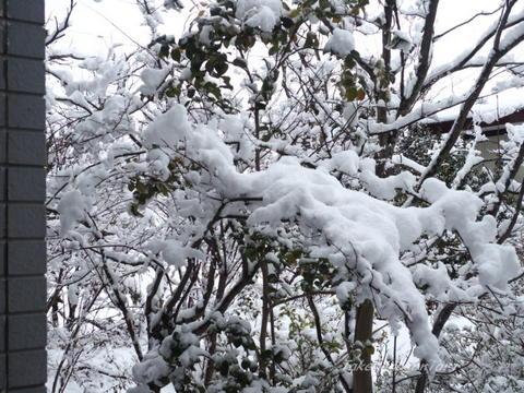 2020-01-21雪 (2).jpg